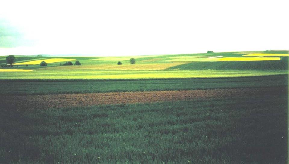 Agricultural intensification Results in a fragmented landscape with: longer distances between source habitats