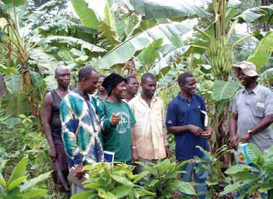 chapter 2 Case Studies in the Crop Sector Researchers, extensionists and farmers interacting on a farmer's field with plantain and banana hybrids intercropped with cocoa in the Assin District Beloved