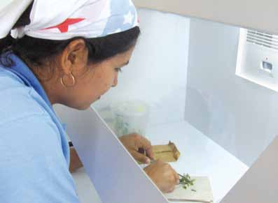 Biotechnologies at Work for Smallholders: Case Studies from Developing Countries in Crops, Livestock and Fish A woman farmer doing tissue culture at the