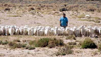 Biotechnologies at Work for Smallholders: Case Studies from Developing Countries in Crops, Livestock and Fish Patagonian Angora goat breeder with his flock Martín Abad Chapter 3.