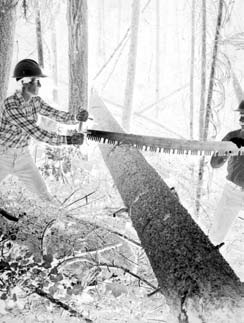 Bucking crosscuts have straight backs and are heavier and stiffer than felling saws. Their weight helps the saw cut faster and the stiffness prevents buckling on the push stroke when one person saws.