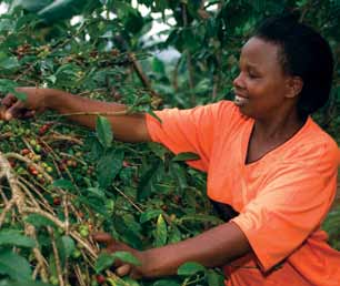 Women All these challenges are far greater for women, who are the majority of farmers in many developing countries. Women control less than 2 per cent of land globally.