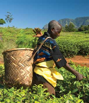 Research by the Fairtrade Foundation (UK) into how to make international supply chains work better for smallholders highlights some of the business interventions needed to add value to the supply