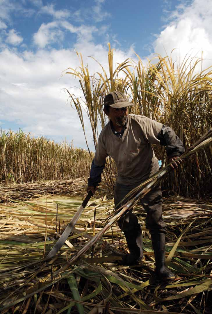 SUMMARY 6Sugar cane Powering harvesting up smallholder by hand,