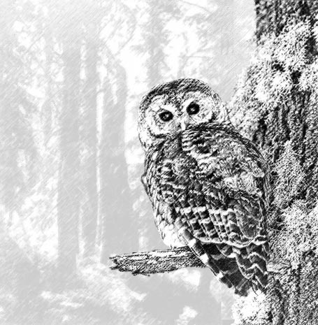September 1997 Of Spotted Owls, Old Growth, and New Policies: A History