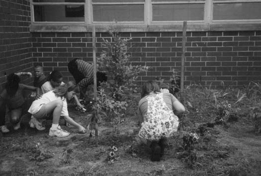 students can plant seedlings, scatter wildflower seeds or mulch new plantings.
