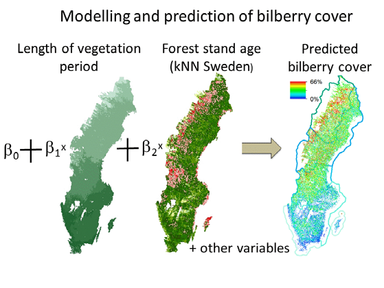Box 3. Regression modelling and prediction of bilberry cover based on NFI data on bilberry cover and on explanatory variables on climate and forest conditions.