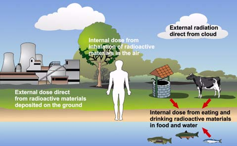 (d) Internal dose from the consumption of contaminated food and water.