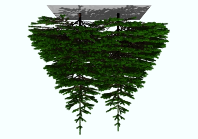 Figure 16: Relationship between tree form and its position in a stand. Figure 15: A model of coniferous trees competing for light.