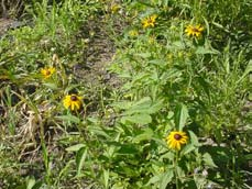 The New England Wild Flower Society (NEWFS) This organization owns and manages Garden in the Woods, a botanical garden specializing in native plants and has New England s largest native plant nursery