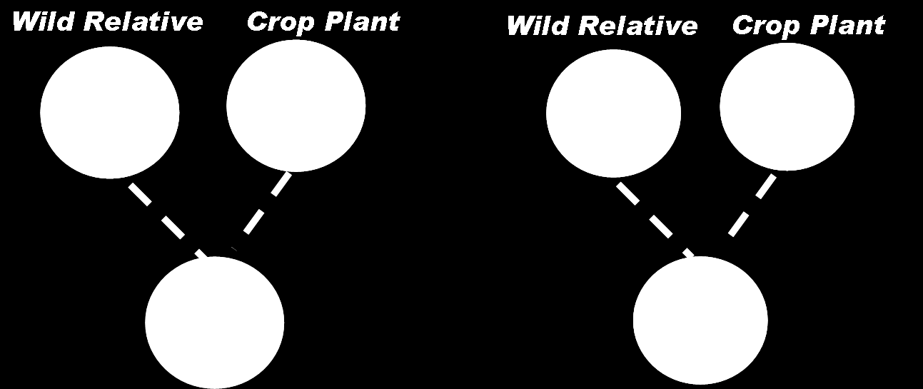 Figure 6. Conventional vs. genetic engineering Conventional Breeding vs.