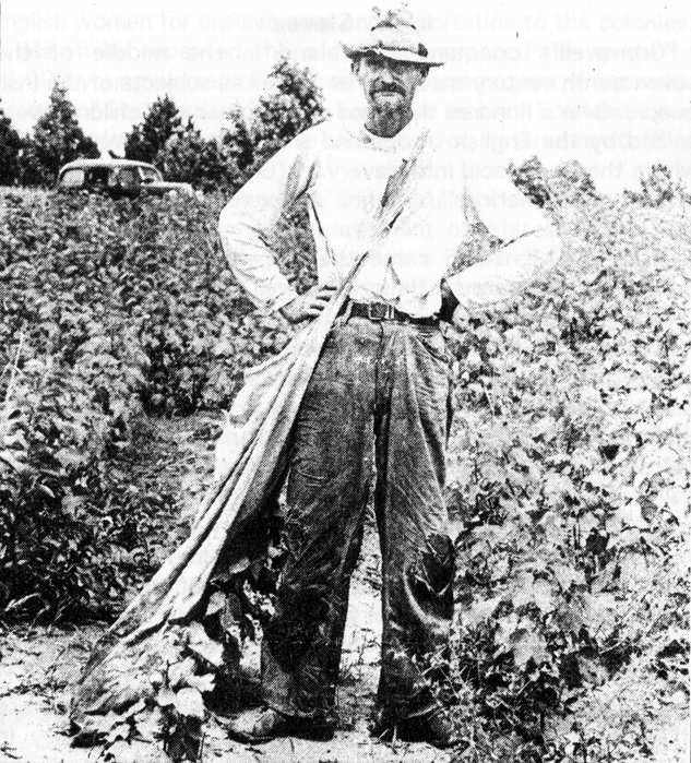 Alabama Sharecropper 1936 The hardscrabble life of rural White Americans, many of them descendants of White slaves, has been made a subject of comedy, scorn, dismissal and denial.