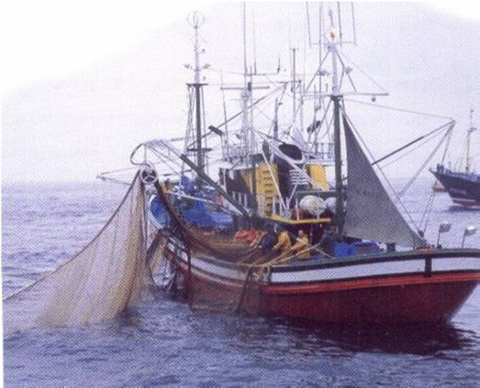 Main industrial and artisan fisheries managed via Global Quota allocations 1. Jurel: Trachurus symmetricus 2.