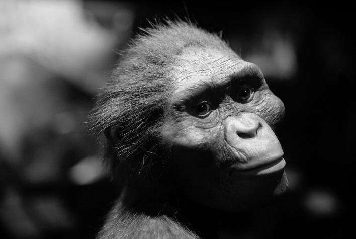 Lucy represents a species prior to Homo called Australopithecus afarensis; she lived approximately 3.5 million years ago and was discovered by Don Johansen in 1974 in the Afar region of Ethiopia.