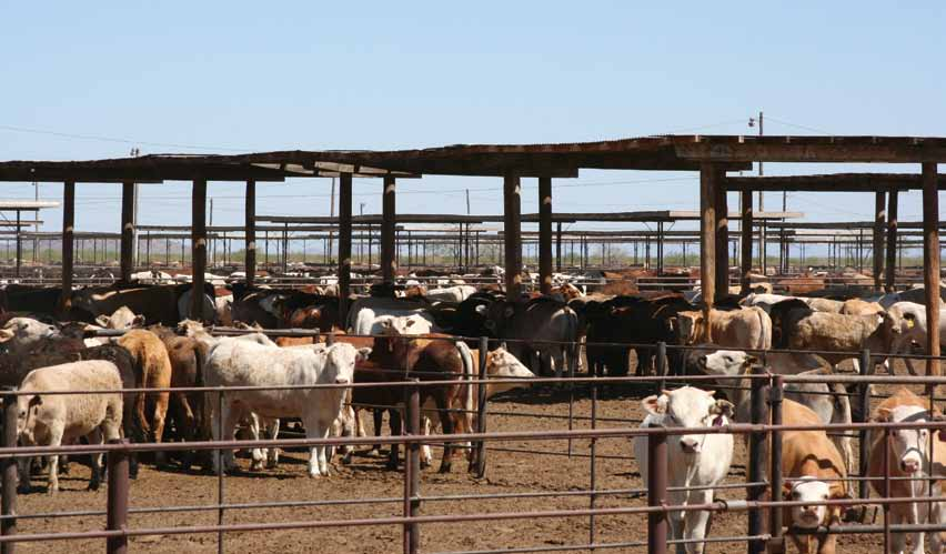 Beef Cattle on Feedlots in Colorado, Nebraska and Kansas, 2007 Food & Water Watch www.factoryfarmmap.