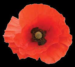 We Remember ANZAC We honour