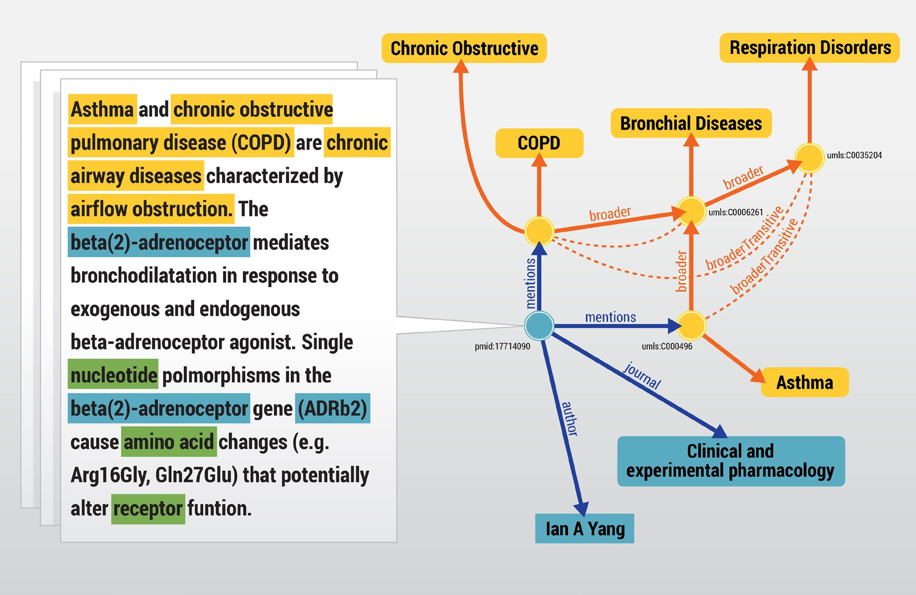 Figure 5: Domain Specific Text Mining The research article above mentions Asthma and COPD. Broader classifications of these diseases are also represented in the triplestore.