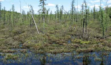 Non-Peatlands Shallow Water Wetlands are wide, flat basins of standing water that receive water from