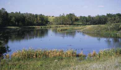 In mid-summer there is often open water in these wetlands, but they may dry out in late summer.