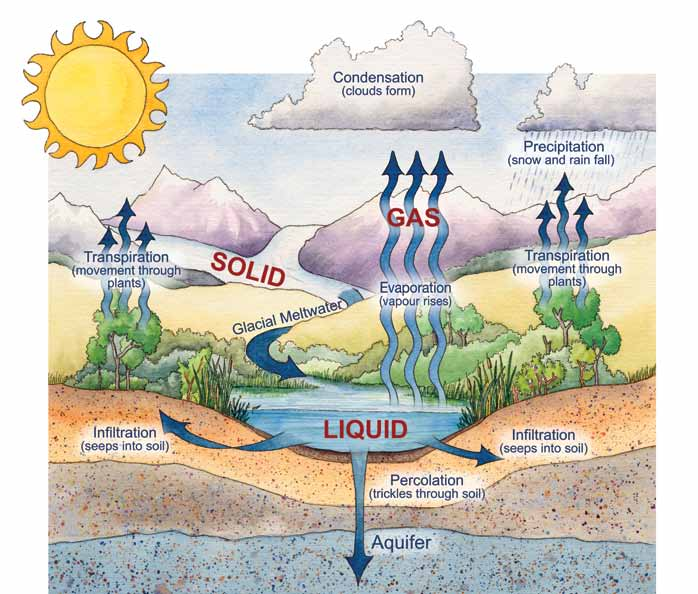 Credit: Bow Habitat Station Water Cycle 2.0 Water Sources Despite the water cycle s ability to replenish water sources, the quantity of water available for human use is finite.