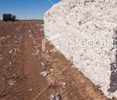 Cotton USA: another world According to the ICAC, the world s leading exporter is also the country with some of the highest costs of production. Whilst the average cost of production is $0.
