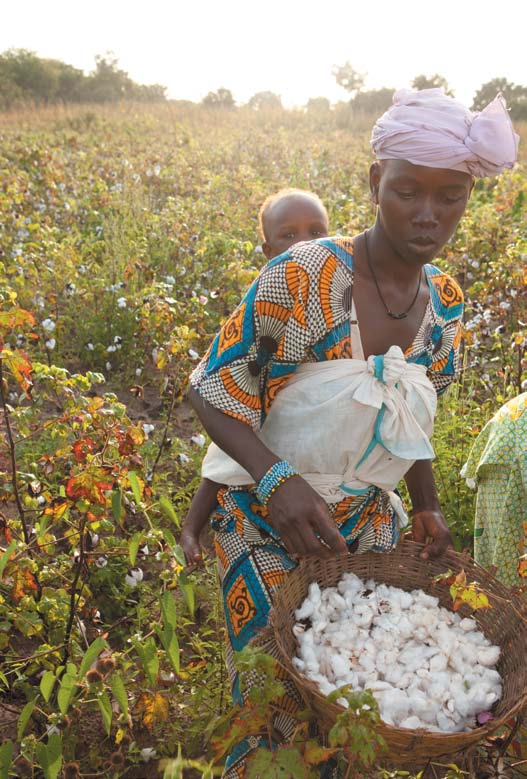 west Africa: stitched up How cotton was introduced into West Africa By the 18th century, the Industrial Revolution in Europe was in full swing and a newly mechanised textile industry was supplied