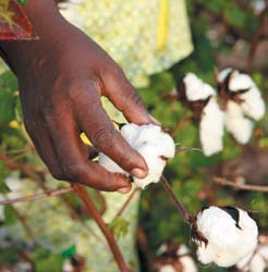 6 Weak Dollar: Increases in cotton prices on world markets between the end of 2007 and 2008 passed West African farmers by because the dollar was weak against the CFA franc (the Communauté Financière