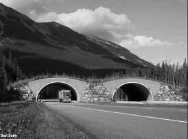 Natural Environment WILDLIFE In Banff National Park, a series of 22 underpasses and two overpasses tied together with fencing have decreased total roadkills by 80 percent.