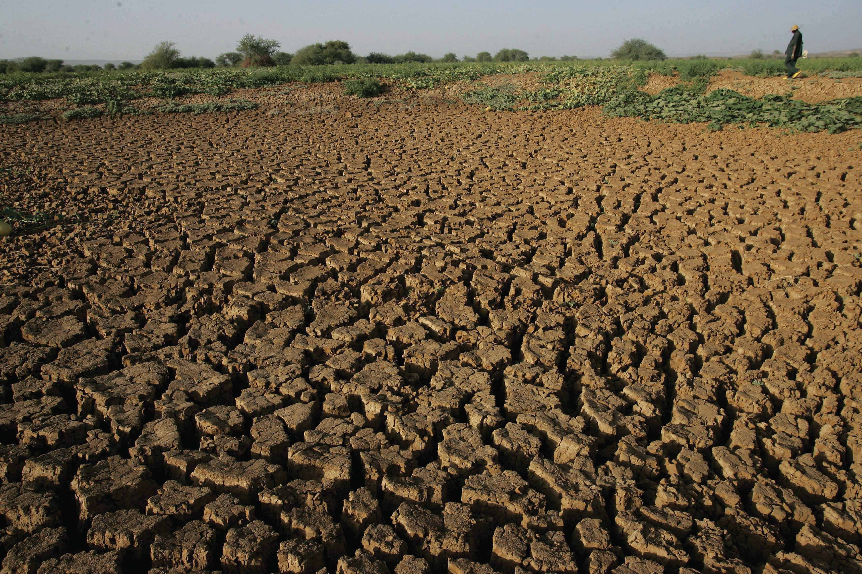 Monitoring Agriculture Drought with Remote Sensing Data FAO Agriculture Stress Index System (ASIS) Drought affects more people than any other type of natural disaster, and is also the most damaging