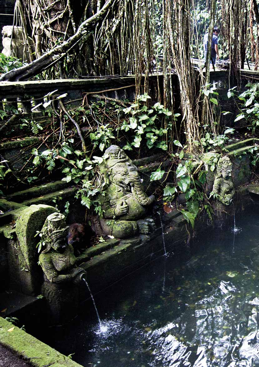 WHERE TO GO Monkey Forest Ubud Enchanting Forest Ubud is a major tourism destination in Bali.