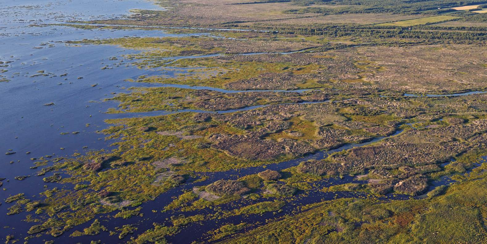LIMINKA BAY Liminka Bay is famous for its birds. Witness extraordinary spring and autumn migrations in the finest wetland habitat in Finland.