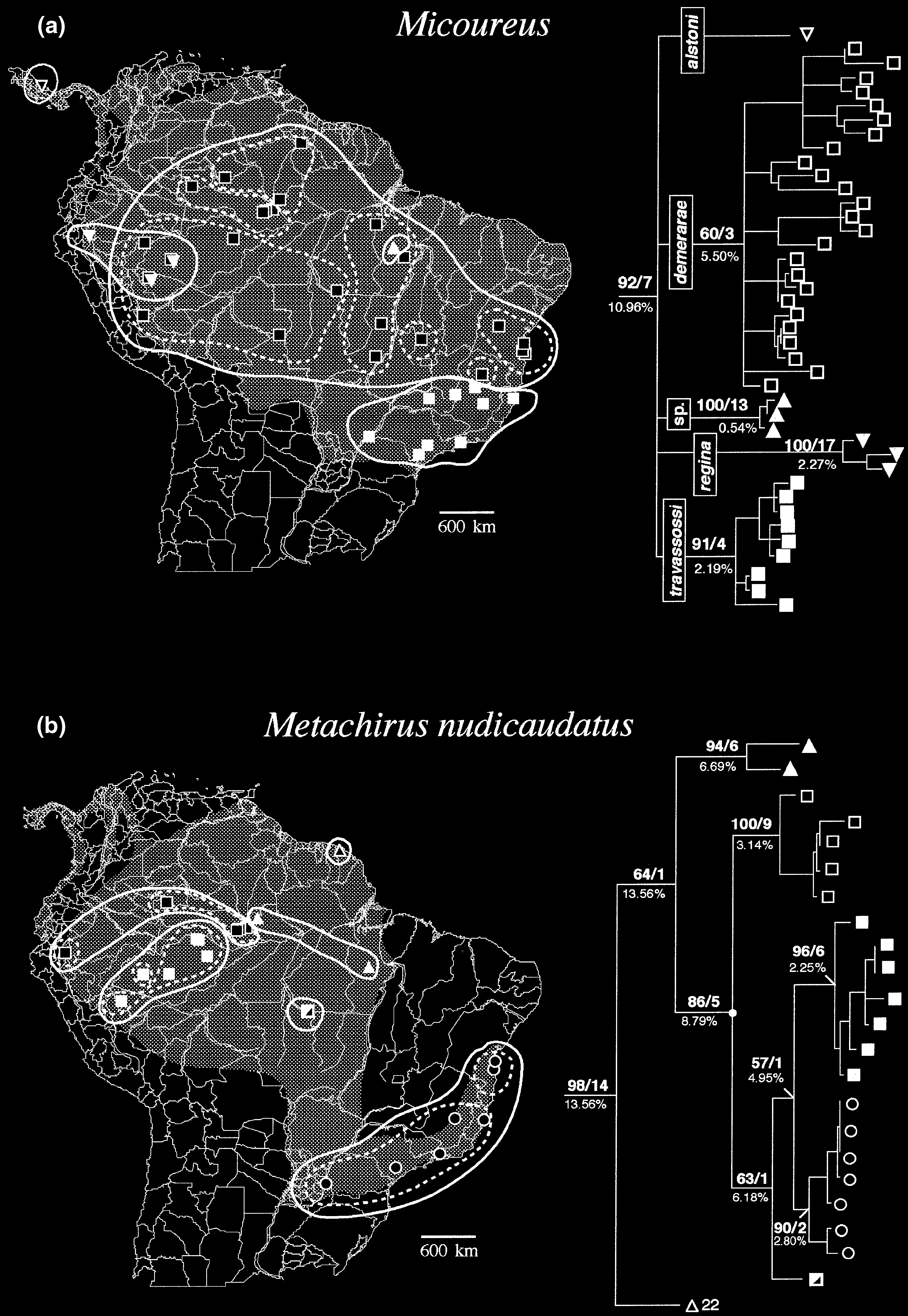 76 L. P. Costa Figure 4 Maps of the range and geographical distribution of the samples of species of Micoureus (a) and Metachirus nudicaudatus (b).
