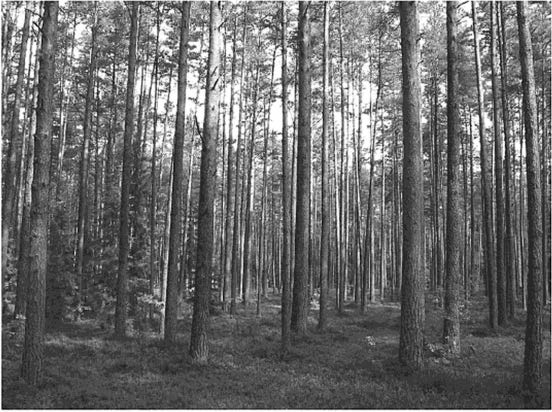 CHAPTER TWO Figure 2.1. Scientific forest, Lithuania. Photograph Alfas Pliura back.