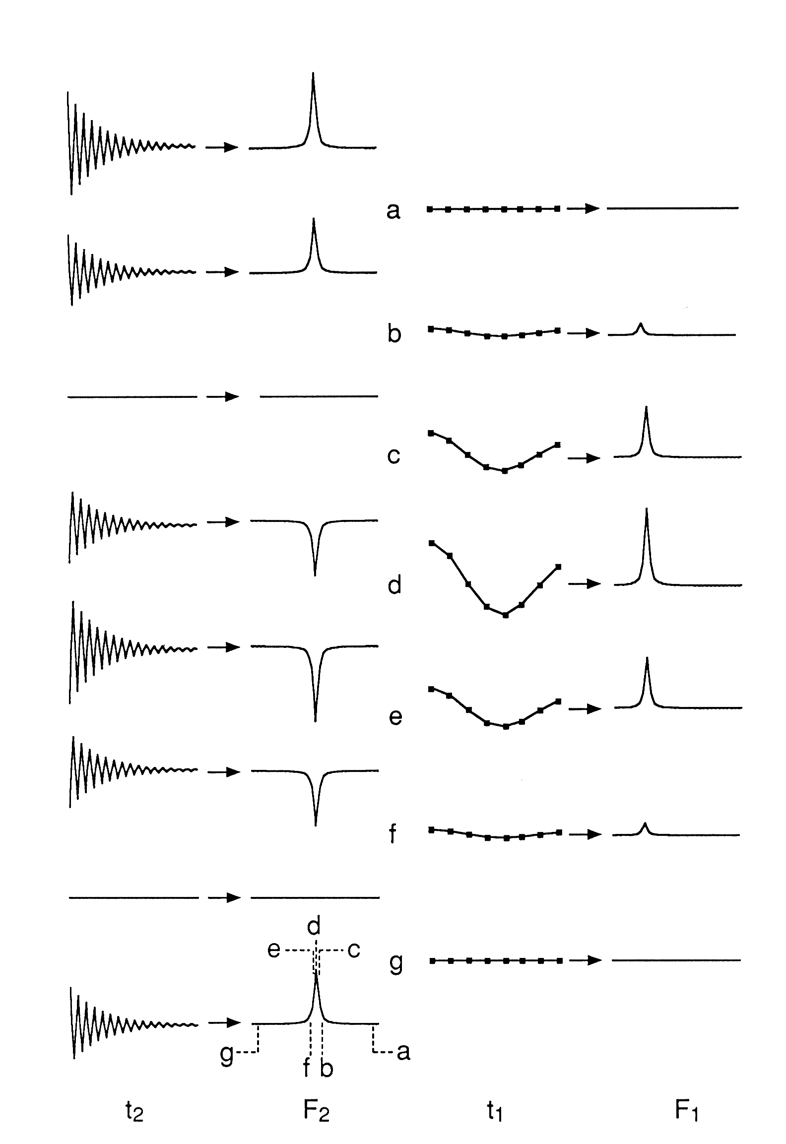 on. This modulation of the amplitude of the observed signal by the t evolution is illustrated in the figure below.
