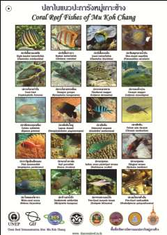 reef organisms and