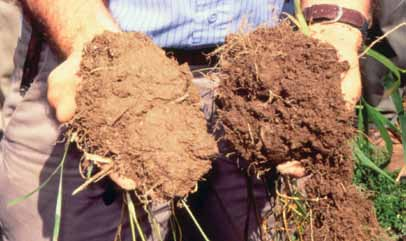 SOIL HEALTH For plants to be healthy, the soil they grow in must be healthy, too.