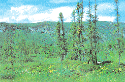 Clayton Rubec, Environment Canada Plate 9: Domed bog near