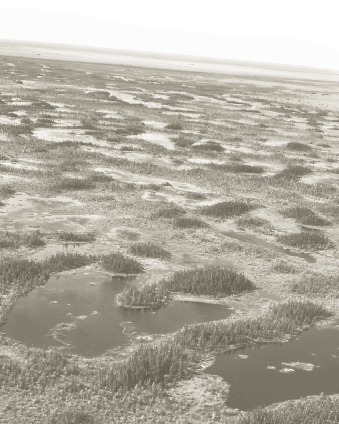 Bog and Fen complex near Moosonee,