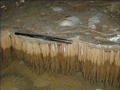 closely resemble microbial biofilms than inorganic mineral deposits (Fig. 1).