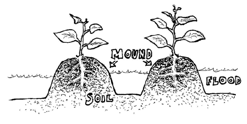 How to Mounds: Till or hoe the dirt, and pile it into mounds roughly 30cm high and wide, or whatever is most suitable in your situation.