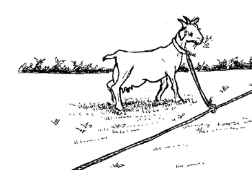 Rope and line method Animals will sometimes go round and round a pole or tree until they strangle themselves.