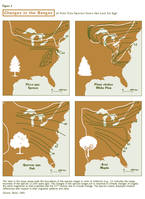 Figure 2. Tree Species Migration since Most Recent Glacial Period Source: Reprinted from Shugart et al. 2003.