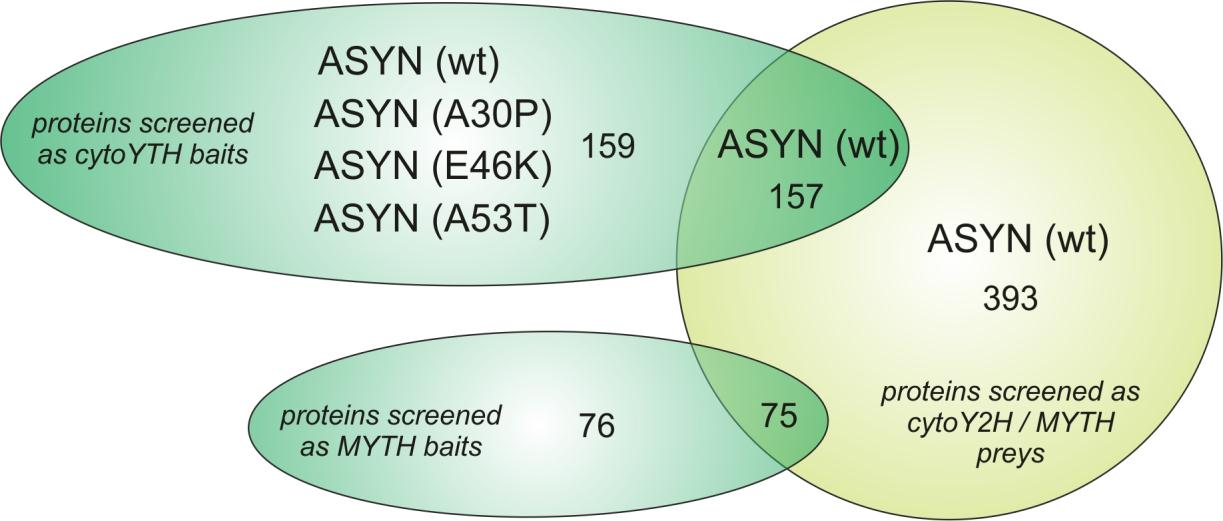 Results Figure 4-17: Alpha-synuclein isoforms and other synaptic proteins screened in the cytoy2h and MYTH system.