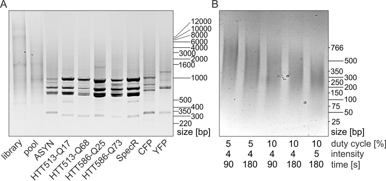 Results Figure 4-24: Optimization of subseq library preparation process. A: PCR amplification of cdna sequences.
