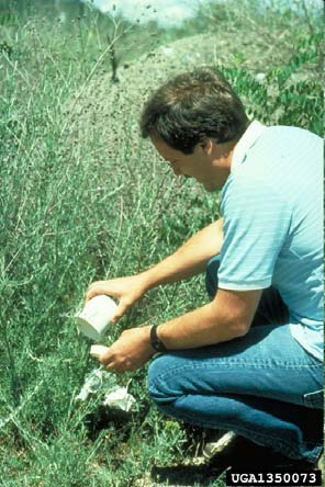 IPM Practices Biological Control: Three Methods: Importation Augmentation Conservation Univ. of Idaho Archives Bugwood.