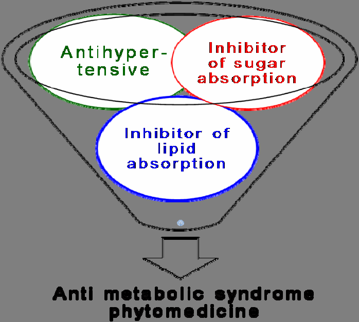 Figure 19. Anti-metabolic syndrome phytomedicine strategy.