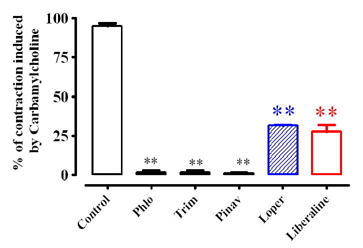Figure 23. The effect of different medicine used in clinics to the contraction induced by 10-6 M of Carbamylcholine. Note that the effect of Liberaline is close to that of Loperamide (Loper).