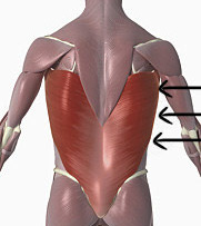 Helps to relieve neck pain and tapers the sides of your back! LAT Latissimus Dorsi 1) Lie on your side with knees slightly bent, bottom knee slightly in front of you.