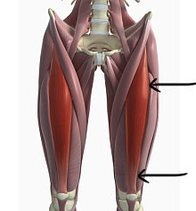 2) Roll forward on your hamstrings from just above your knees to just below your glutes. Reverse direction.