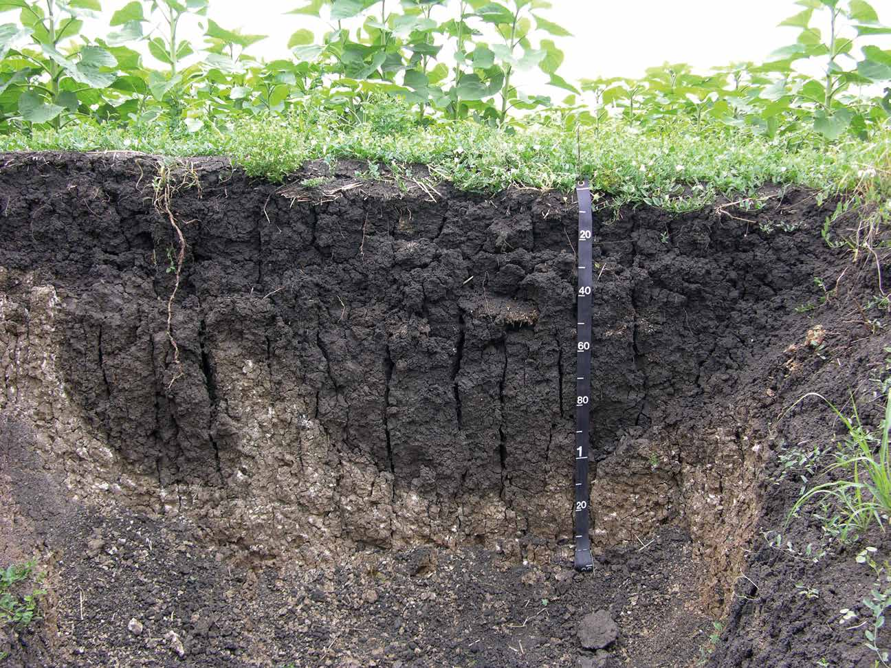 World reference base for soil resources pdf for Soil as a system